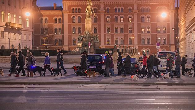 Teilnehmer und ihre besten Freunde beim gemeinsam nächtlichen Spazierganz entlang des Rings (Bild: Purina PetCare Austria)
