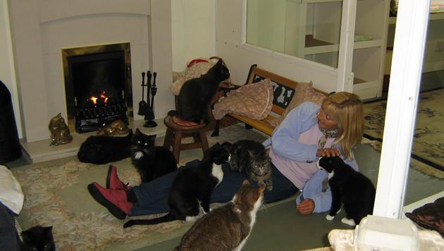 """Herziges """"Seniorenheim"""" für Katzen in England (Bild: Lincolnshire Trust for Cats)"""