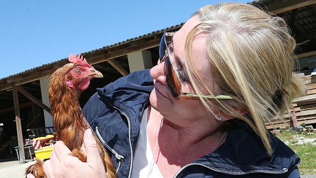 Auch die Anschaffung von Hühnern sollte man sich gut überlegen... (Bild: Jürgen Radspieler)