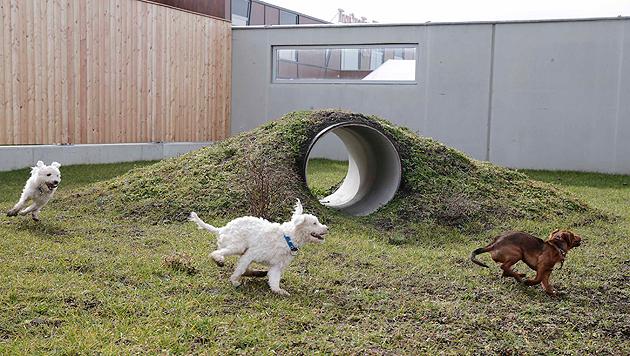 Diese drei Hunde genießen ihren Freilauf, der an das Gehege angeschlossen ist. (Bild: Klemens Groh)