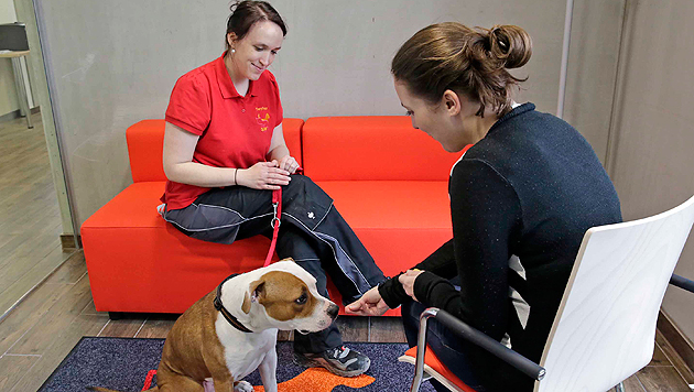 In eigenen Begegnungsräumen dürfen sich Interessenten und Hunde kennenlernen. (Bild: Klemens Groh)
