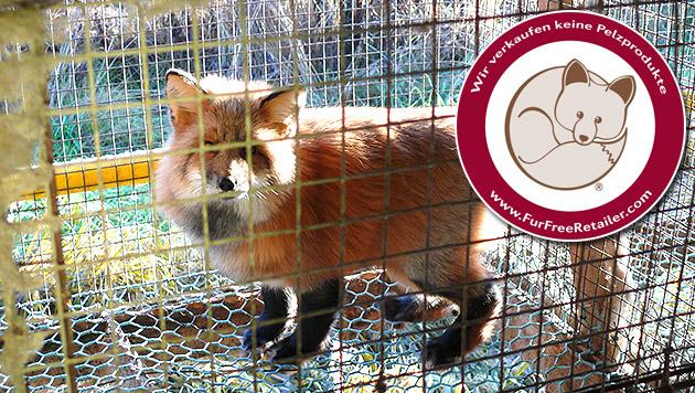 "Hofer tritt dem ""Fur Free Retailer""-Programm bei (Bild: Vier Pfoten)"