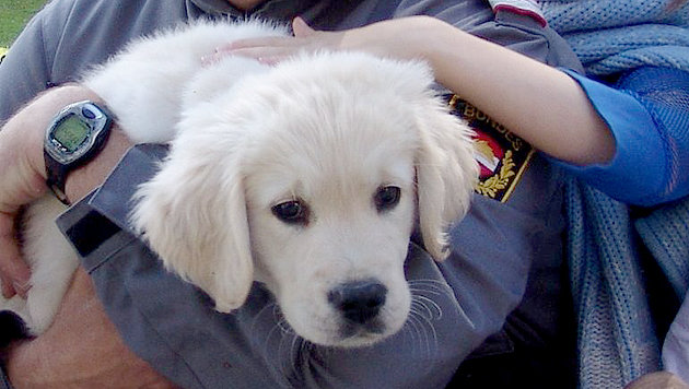 """""""Semi"""" vor zehn Jahren: Erst nach intensivem Spezialtraining trat der Hund in den """"Pflegedienst"""". (Bild: kba)"""