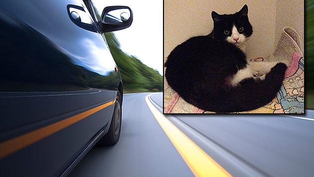 """Schwer verletzte Katze im Straßengraben """"entsorgt"""" (Bild: privat, thinkstockphotos.de)"""