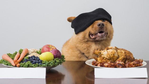 Veganes Hundefutter: Wie gesund ist es wirklich? (Bild: thinkstockphotos.de)