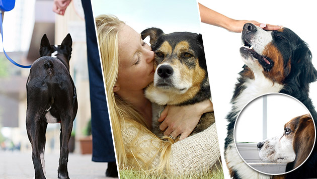 Elf Dinge, die Hunde an Menschen hassen (Bild: thinkstockphotos.de)