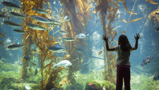 Rätsel um Massensterben von Fischen in Tokio (Bild: thinkstockphotos.de (Symbolbild))
