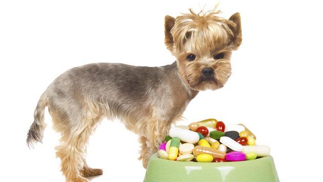 Nahrungsergänzung für Tiere nur gezielt einsetzen (Bild: thinkstockphotos.de)