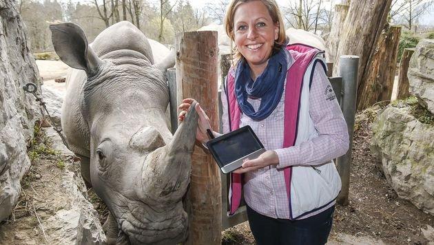 """Zoo-Chefin Sabine Grebner mit dem Monitor, der eine lückenlose Überwachung von """"Tamu"""" ermöglicht. (Bild: Markus Tschepp)"""