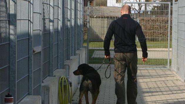 """""""Krone Tierecke"""" bewahrte Dealer-Hund vor dem Tod (Bild: Claudia Fischer)"""
