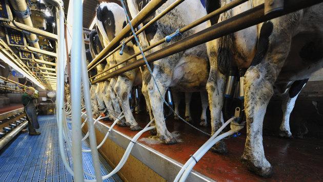 Ende der Milchquote in der EU: Angst vor Folgen (Bild: dpa/Carmen Jaspersen)