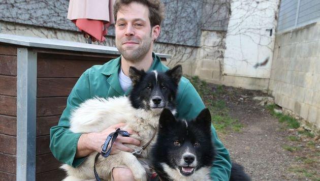 Die Grönland-Hunde warten steiermarkweit in Heimen auf Besitzer. (Bild: Jürgen Radspieler)
