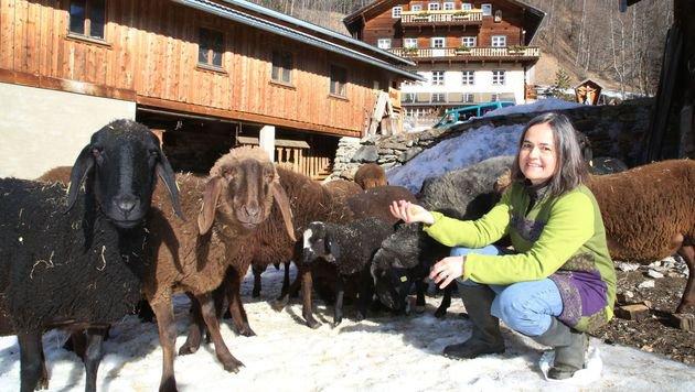 Das Braune Bergschaf war bereits fast ausgerottet - vor 10 Jahren gab es nur noch 70 Tiere in Tirol. (Bild: Uta Rojsek-Wiedergut)