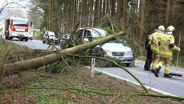 Ein Pkw wurde in Michaelbeuern (Salzburg) von einem umstürzenden Baum getroffen. (Bild: APA/FMT-PICTURES/T.A.)