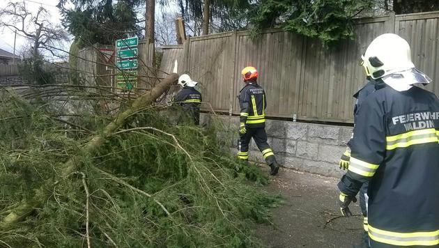 Die Feuerwehr beseitigt im Bezirk Urfahr-Umgebung (OÖ) einen Baum, der auf eine Straße gestürzt war. (Bild: APA/BFK UU/PRESSESTELLE)