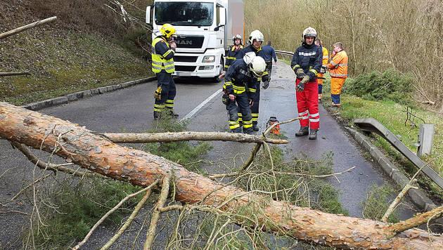 Ein Baum landete auf eine Straße in Engerwitzdorf in Oberösterreich. (Bild: APA/BFK UU/PRESSESTELLE)