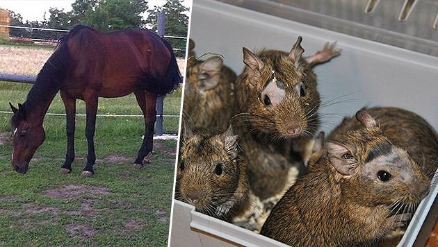 Dechanthof versorgt Tiere mit schlimmem Schicksal (Bild: Tierheim Dechanthof)