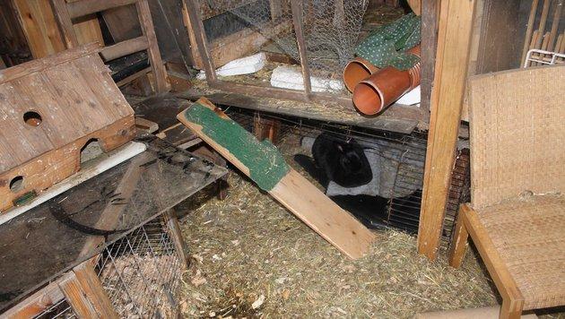 In diesen Verschlägen und Käfigen waren die Tiere nicht artgerecht untergebracht. (Bild: Tierschutzverein für Tirol)