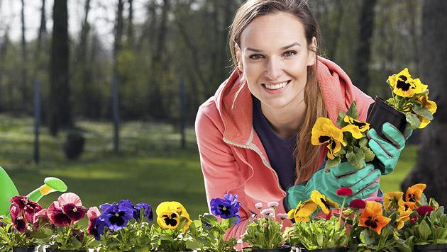 Basis-Pflanzen-Tipps für absolute Anfänger (Bild: thinkstockphotos.de)