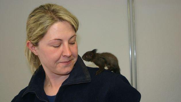 Blindes Eichhörnchen-Baby hilflos in Ktn gefunden (Bild: Claudia Fischer)
