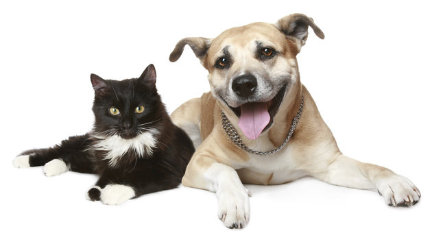 Hundehaufen & Katzenjammer: Wenn Nachbarn nerven (Bild: thinkstockphotos.de)