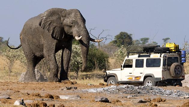 Salzburgerin bei Safari in Afrika schwer verletzt (Bild: thinkstockphotos.de (Symbolbild))