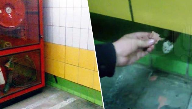 """Von """"Biso"""" war nur der Schwanz zu sehen (l.), nach Futter angelte er mit der Pfote (r.). (Bild: facebook.com, Screenshot YouTube/VentogateOfficial)"""