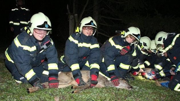 Zwei junge Rehe retteten die Feuerwehrleute mitten im Ortsgebiet. (Bild: Florian Zeilinger/FF Maria Enzersdorf)