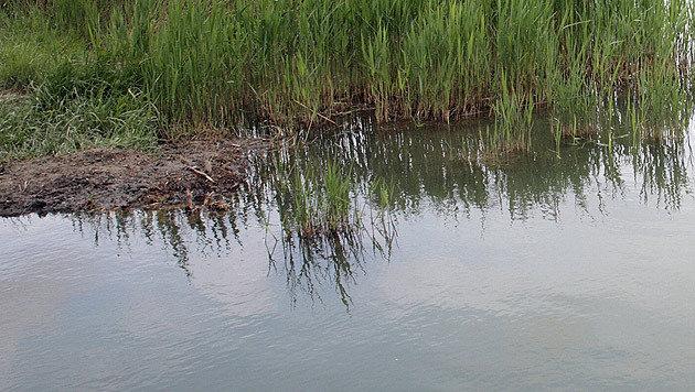 Zweijährige bei Nachbarn in Teich ertrunken (Bild: Peter Tomschi (Symbolbild))