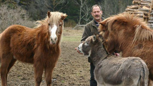 """Alfred Österreicher hat immer ein Leckerchen für die Isländer """"Ari"""" und """"Blessie"""" und Esel """"Charly"""". (Bild: Claudia Fischer)"""