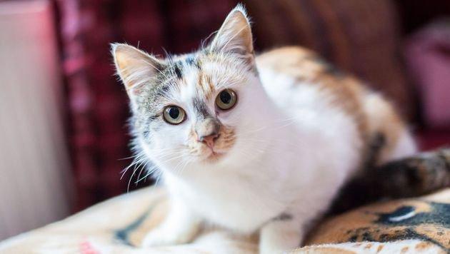 Frisch verliebt? So spielt auch die Katze mit! (Bild: Lavanttaler Tierhilfe)