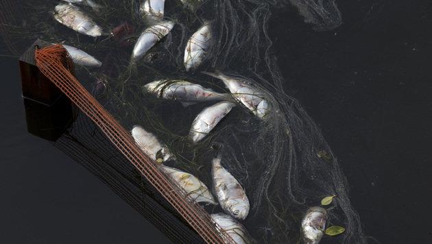 21 Tonnen toter Fisch: So schön wird Olympia 2016 (Bild: AP)