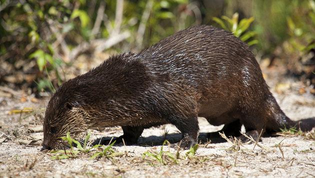 Rekorde im Tierreich: Heimische Arten vorne dabei (Bild: thinkstockphotos.de)