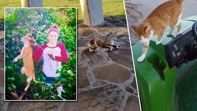 US-Tierärztin posiert mit von ihr erlegtem Kater (Bild: facebook.com)