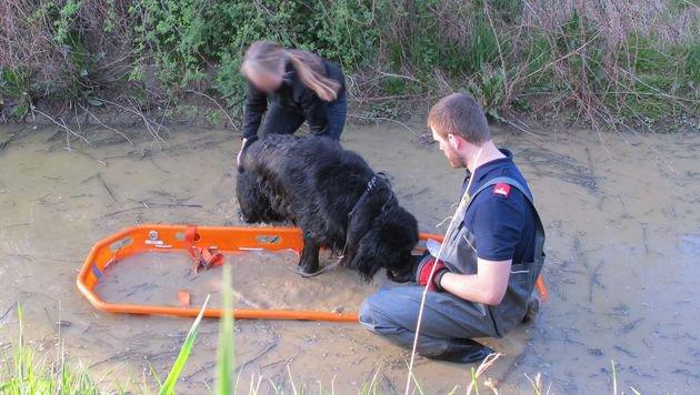 Feuerwehr rettete Hund aus Schlam(m)assel in NÖ (Bild: FF Herzogenburg-Stadt)