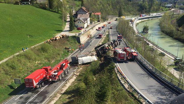 Viehtransporter kippte um - sieben Tiere tot (Bild: Werner Kerschbaummayr)