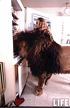 Der Blick in den Kühlschrank war bei Tippi Hedren etwas anders. (Bild: Time Magazine)