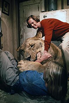 """Alle Angriffe der Raubkatzen, die man in """"Roar"""" sieht, sind echt. (Bild: AP)"""