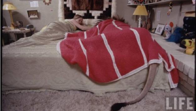 Melanie Griffith schlief mit einem Löwen im Bett. (Bild: Life Magazine)