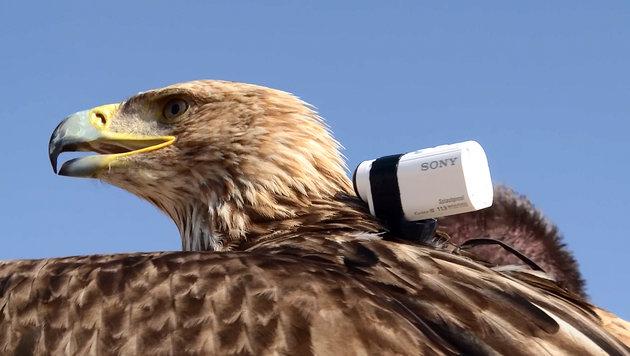 """""""Action-Cams: Das sind die besten (Bild: Sony)"""""""