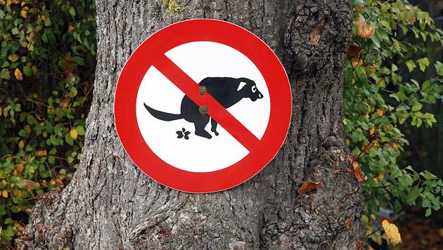 Nun gilt Hundeverbot im Ottakringer Askin-Park (Bild: thinkstockphotos.de)