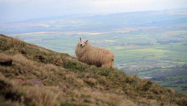 Was Sie in Wales keinesfalls verpassen sollten! (Bild: lhi)