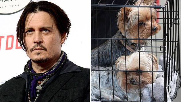Australien will Johnny Depps Hunde einschläfern (Bild: Dan Steinberg/Invision/AP, twitter.com/louistfshum)