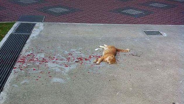 Auf den ersten Blick denkt man bei diesem Bild an eine schwer verletzte Katze. (Bild: Imgur/HoneyFlowers)