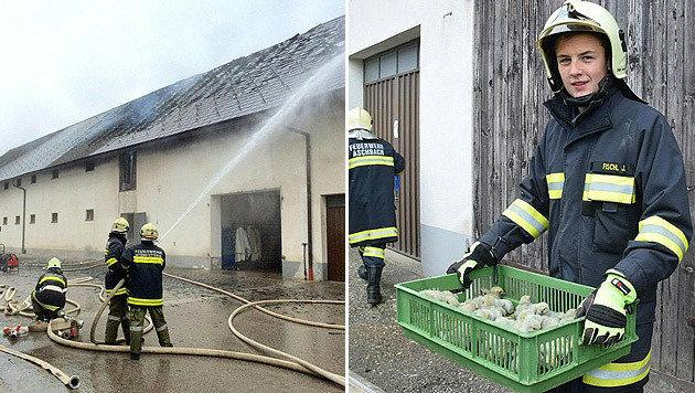 Einsatzkräfte bei den Löscharbeiten und bei der Rettung der Küken (Bild: APA/BFK AMSTETTEN/UNBEKANNT)