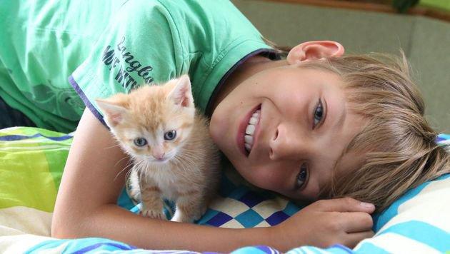 Der neunjährige Martin hilft beim Versorgen der Katzenkinder. (Bild: Uta Rojsek-Wiedergut)