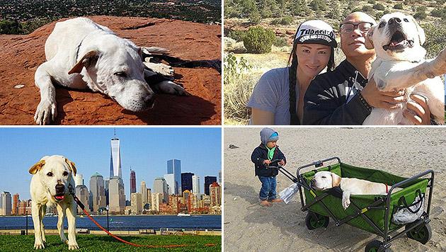 US-DJ ging mit todkrankem Hund auf große Reise (Bild: Instagram/pohthedogsbigadventure)