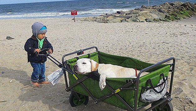 Ein Ausflug zum Strand - kurz nach der Aufnahme mussten die Reisenden umkehren. (Bild: Instagram/Pohthedogsbigadventure)