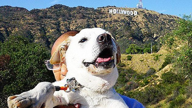 Vor dem berühmten Hollywood-Schriftzug in Kalifornien (Bild: Instagram/Pohthedogsbigadventure)