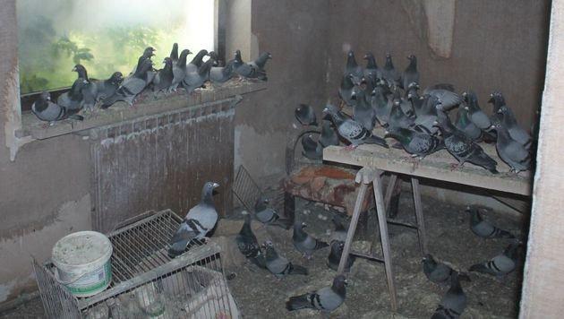 Die Tiere mussten in den völlig verdreckten Wohnräumen ausharren. (Bild: Wiener Tierschutzverein)